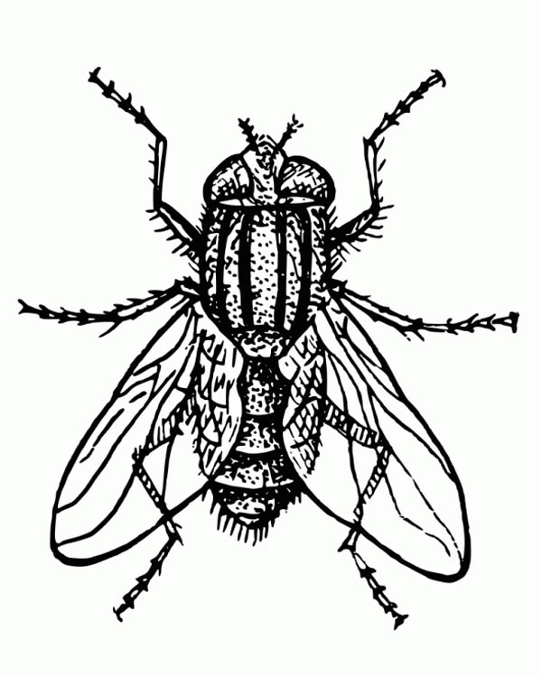 Hairy Fly Coloring Page : Coloring Sky