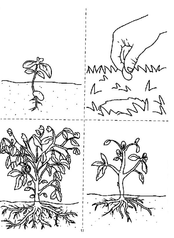 How Does A Growing Plants Coloring Page : Coloring Sky