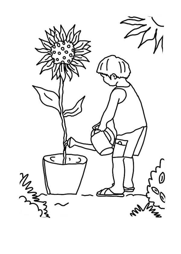 Kid Growing Plants Sunflower Coloring Page : Coloring Sky