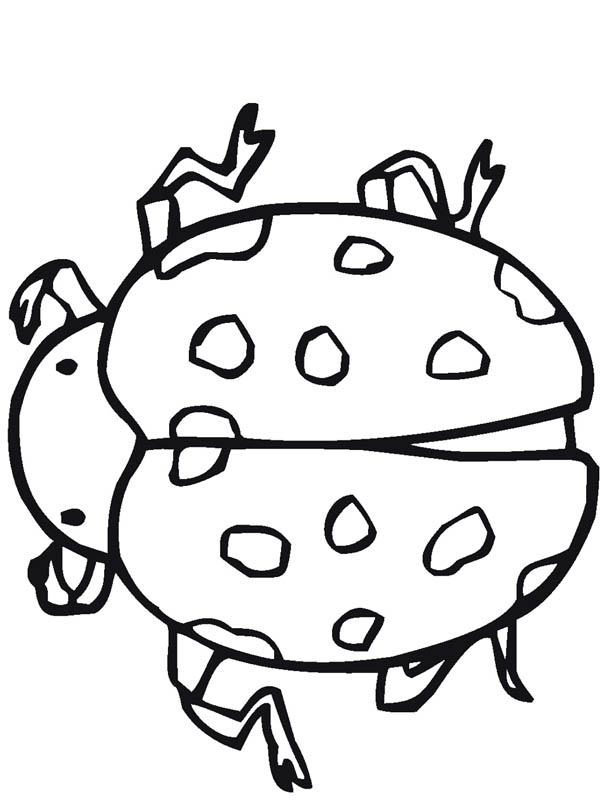 Ladybug Insect Coloring Page: Ladybug Insect Coloring Page