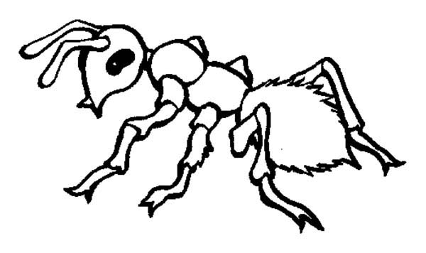 Picture Of Fire Ant Coloring Page : Coloring Sky