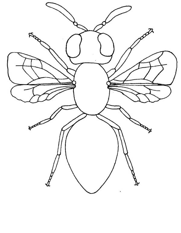 Picture Of Insect Colouring Page Coloring Page : Coloring Sky