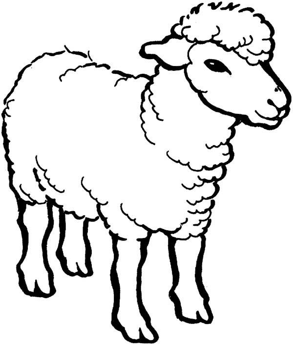 Alpha Male Sheep Coloring Page : Coloring Sky