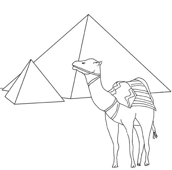 Egypt Pyramid And Camel Coloring Page : Coloring Sky