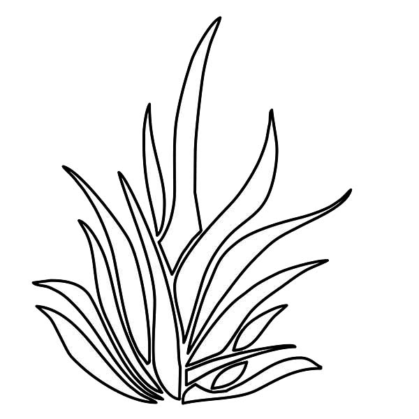 Grass Growing Thrives Plants Coloring Page : Coloring Sky