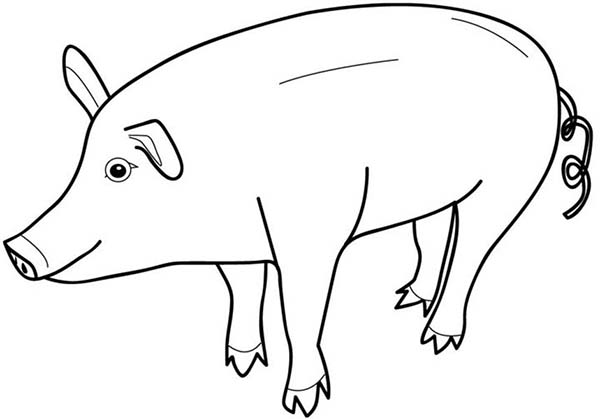 Pig Look Like Piggy Bank Coloring Page : Coloring Sky