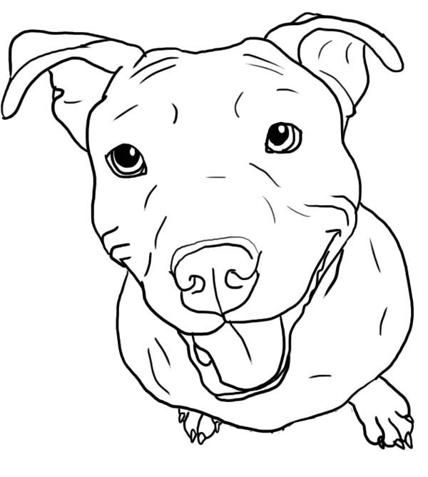 Pitbull Stick Her Tongue Out Coloring Page : Coloring Sky