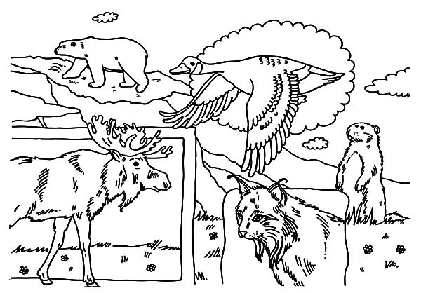 Bunch Of Indigenous Animals On Canada Day Event Coloring
