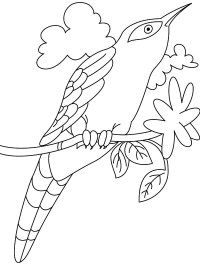 Cuckoo Coloring Page Cuckoo Bird Coloring Pages Printable