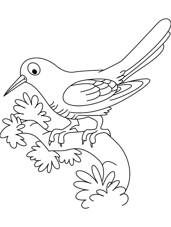 Cuckoo Bird Outline Coloring Pages: Cuckoo Bird Outline
