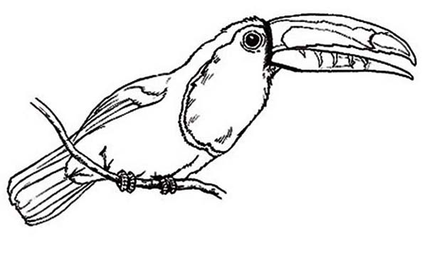Toucan template
