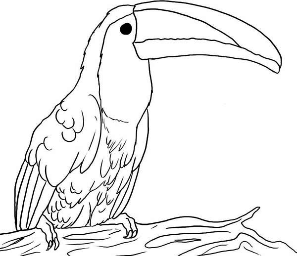Beak Coloring Pages Coloring Pages