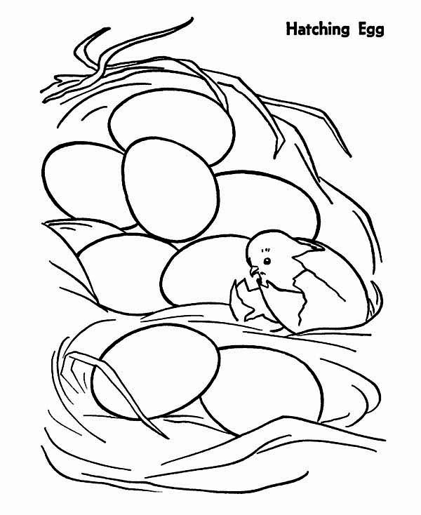 Chicken Just Hatching from Egg Coloring Page: Chicken Just