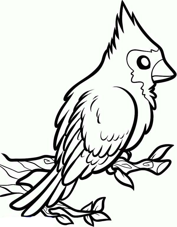 Pin Cardinal-bird-coloring-pages-birds-ikids-page on Pinterest