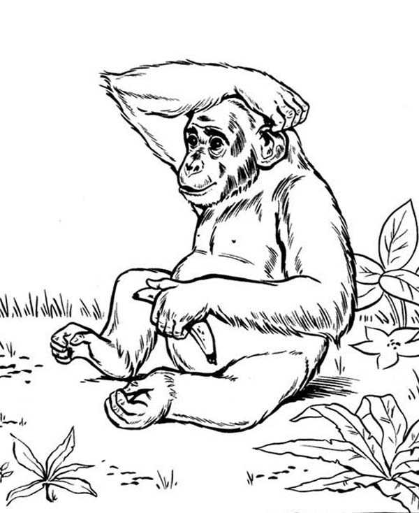 Chimpanzee Colouring In Cake Ideas and Designs