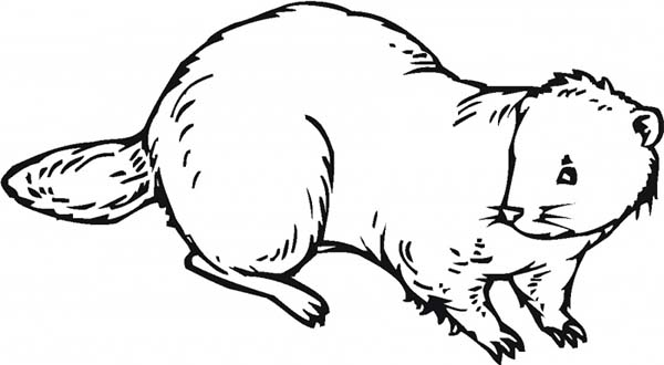 Nocturnal Animal Beaver Coloring Page: Nocturnal Animal