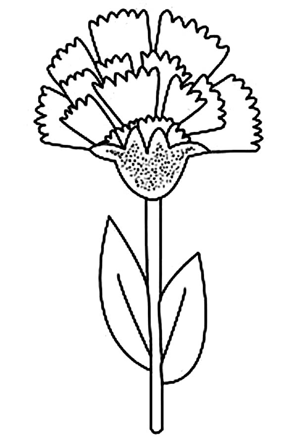 Tennessee State Bird Coloring Page