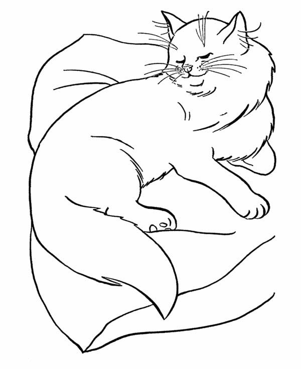 Persian Cat is Sleeping Coloring Page: Persian Cat is