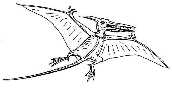 Pteranodon With Sharp Teeth Coloring Page: Pteranodon with