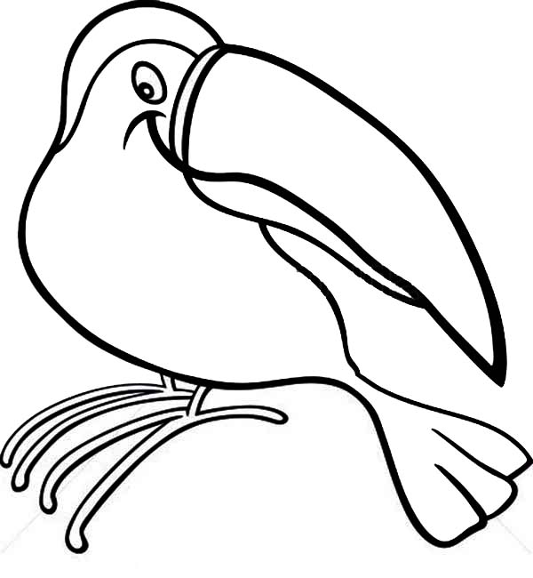 Cute Toucan Coloring Coloring Pages