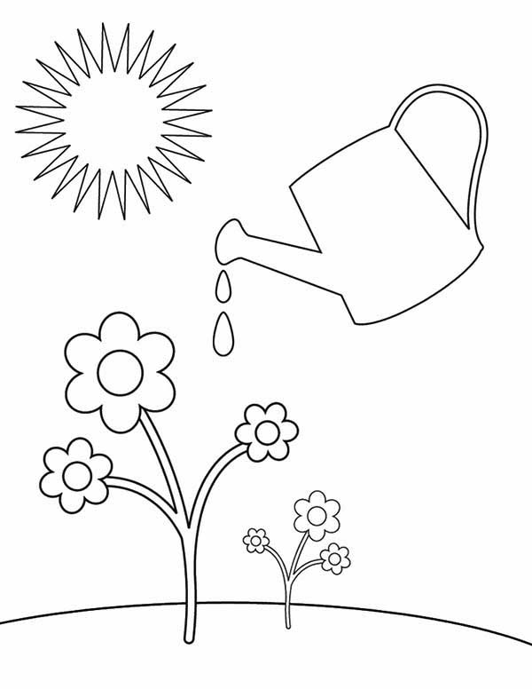 Watering Plants Drawing