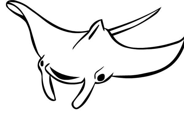 Eagle Manta Ray Coloring Pages: Eagle Manta Ray Coloring