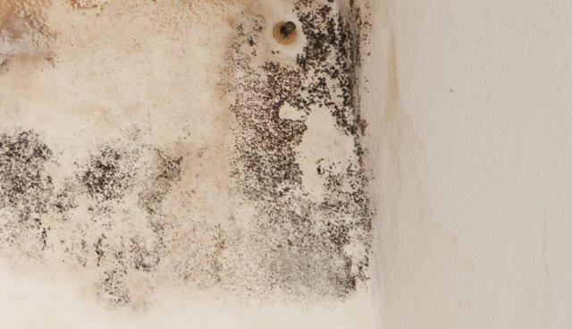 Uno spray antimuffa è consigliato per il trattamento di piccole porzioni di pareti o comunque aree poco estese. Come Eliminare La Muffa Dai Muri Definitivamente Colorivernici It