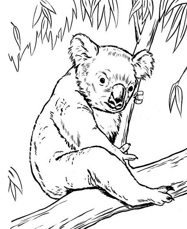 Free coloring pages of koala lou