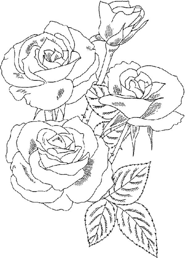 Roses Flower Bouquet Coloring Page: Roses Flower Bouquet
