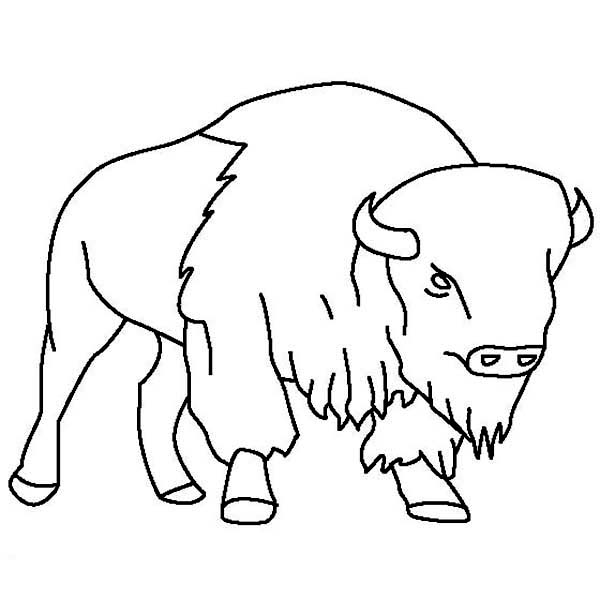 Bison Outline Coloring Page: Bison Outline Coloring Page