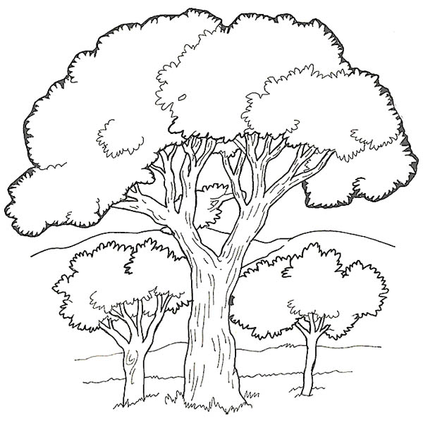 Coloring Picture Of Rainforest Tree Coloring Pages