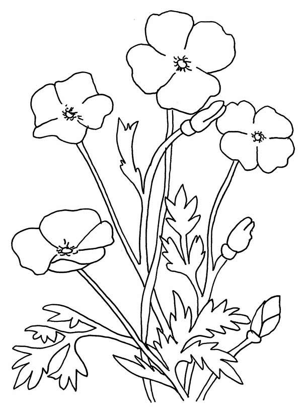 Poppy Flower Coloring Page: Poppy Flower Coloring Page