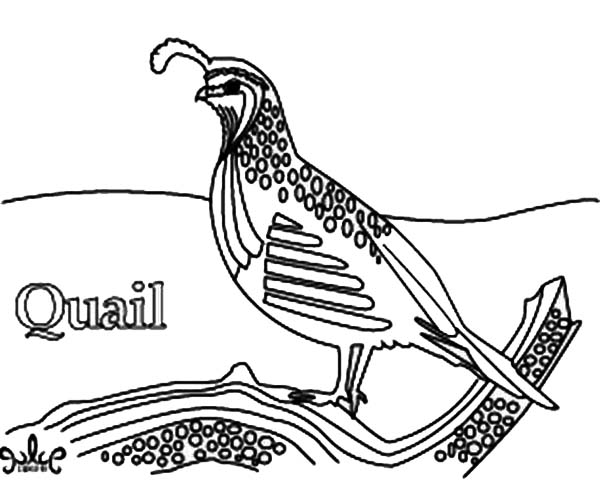 Realistic Drawing of Quail Coloring Page: Realistic