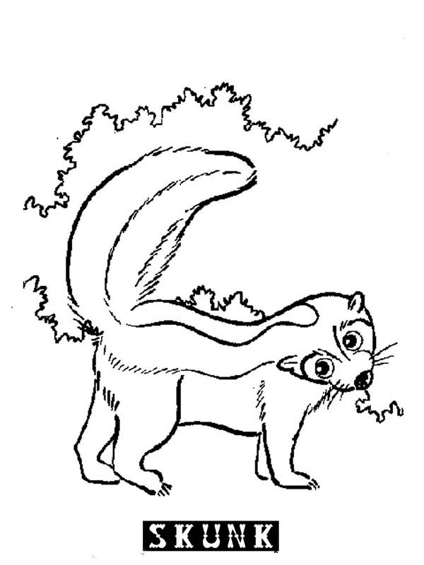 Free coloring pages of cartoon skunk
