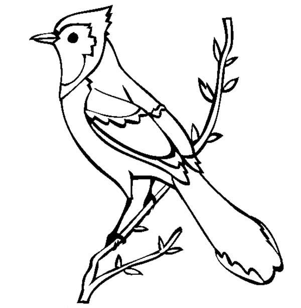 Beautiful Blue Jay Bird Coloring Page: Beautiful Blue Jay