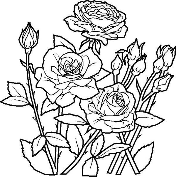 Beautiful Rosed Spring Flower Coloring Page: Beautiful