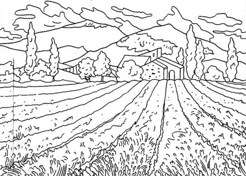 Flower Field of Nature Coloring Page: Flower Field of