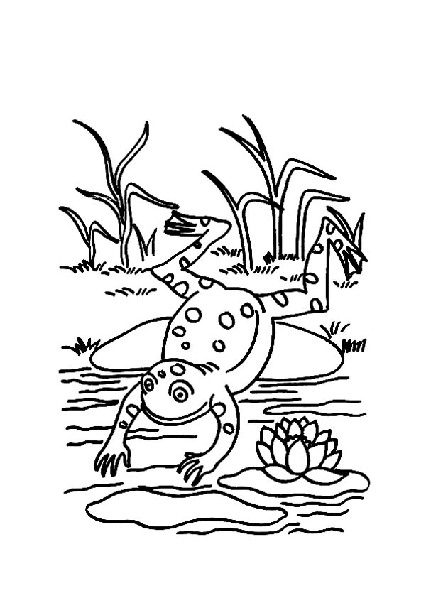 Frog Pond Coloring Page Coloring Pages