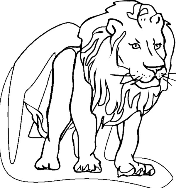 Lion Coloring Page for Kids: Lion Coloring Page for Kids