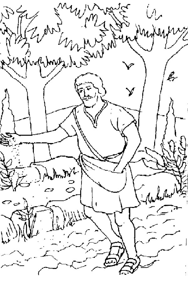 Mustard Seed Coloring Page Sketch Coloring Page