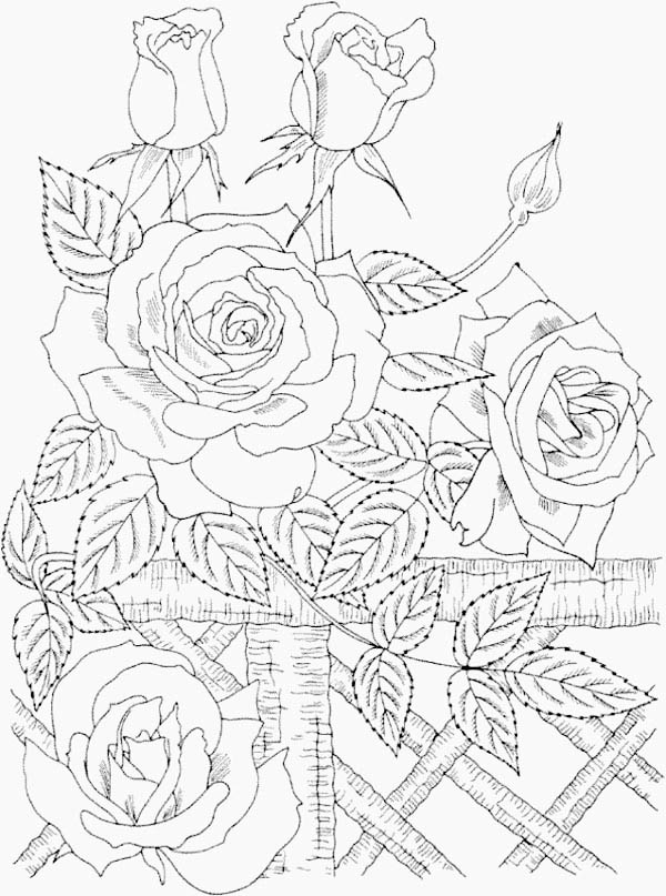 Beautiful Wild Roses in Nature Coloring Page: Beautiful