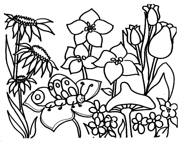 Butterfly Coloring Pictures Gardens