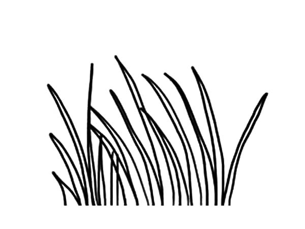 Grass : Plants World Grass Coloring Pages, Picture of
