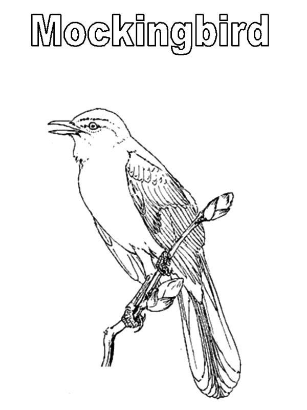 Free mockingbird outline coloring pages