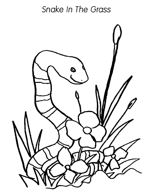 Grass Snake Coloring Pages