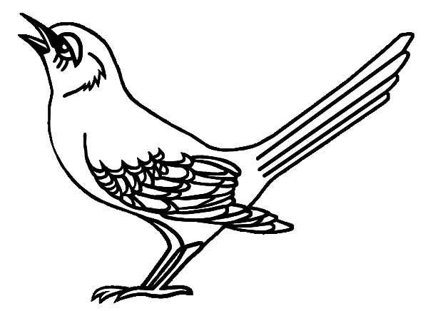 Free northern mocking bird coloring pages