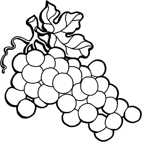 How to Draw Grapes Coloring Pages: How to Draw Grapes