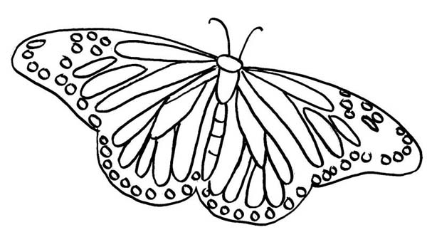 Painted Lady Butterfly Illustration Coloring Page