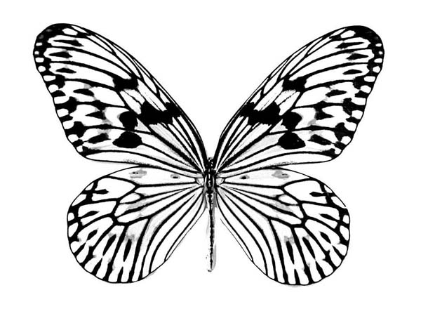 Realistic Butterfly Drawing Coloring Page: Realistic