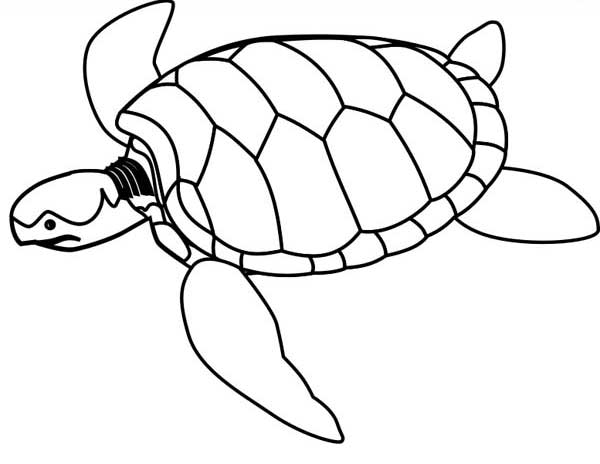 Sea Turtle Endangered Coloring Page: Sea Turtle Endangered